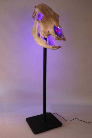 Une sculpture lumineuse en crâne de bovin